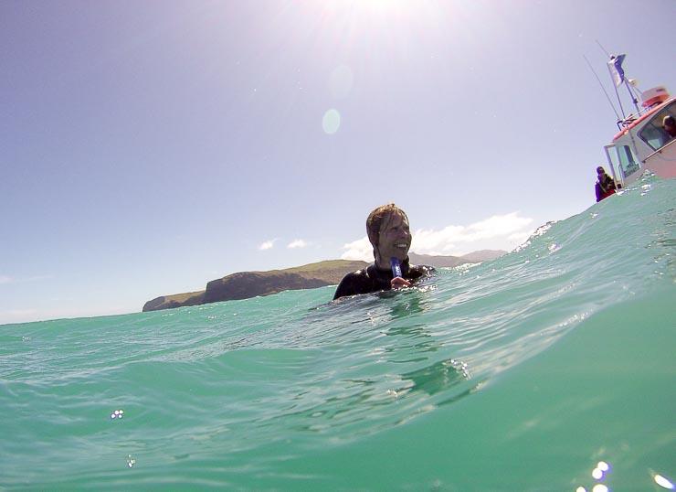 neuseeland akaroa schwimmen mit hector delfinen