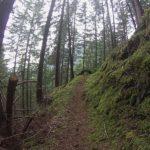 Gore-tex TransAlpineRun Wald