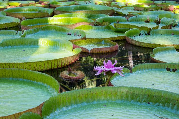 Botanischer Garten Impression