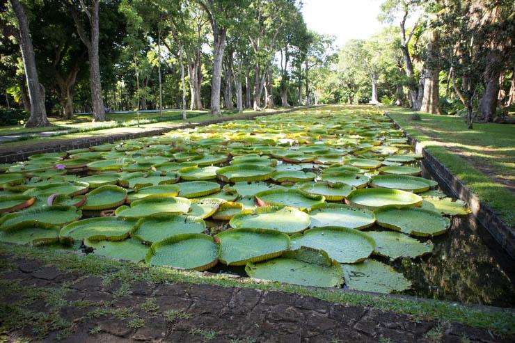 Botanischer Garten Wasserlilien