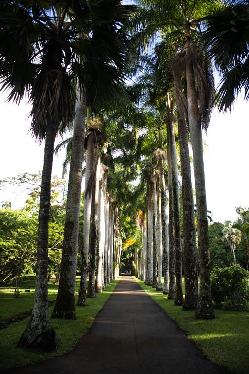 Botanischer Garten Palmenallee