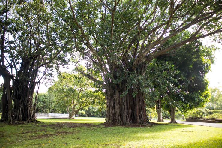 Botanischer Garten Baumbestand