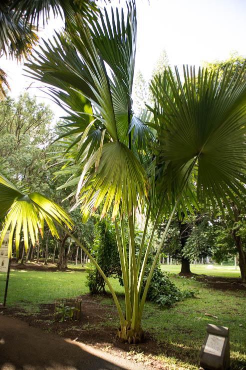 Botanischer Garten Impressionen