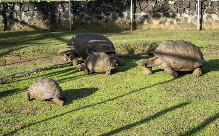Botanischer Garten Schildkröten