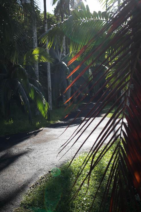 Botanischer Garten Weg