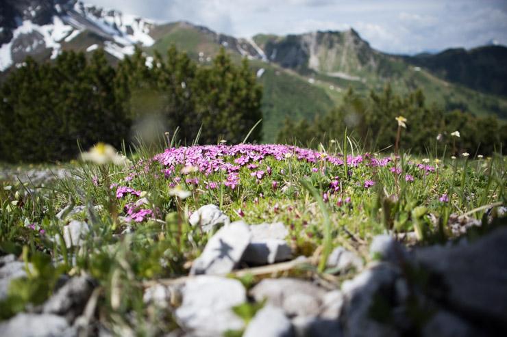 Liechtenstein Berge und Wiesen, Blumenwiese