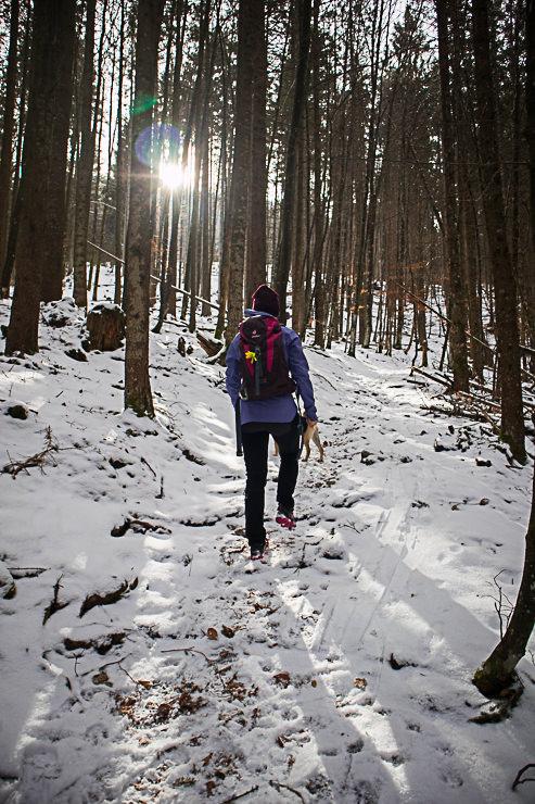 Staffel Aufstieg Wald