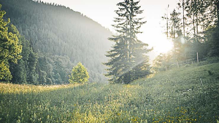 wildbarren sonnenaufgang ruhe