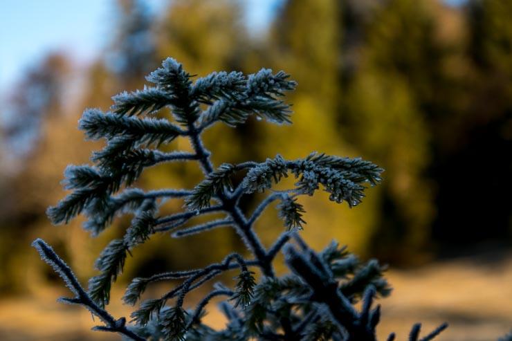 hirschhoerndlkopf winterliche eindruecke november